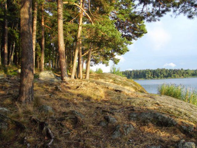 природа Швеции деревья