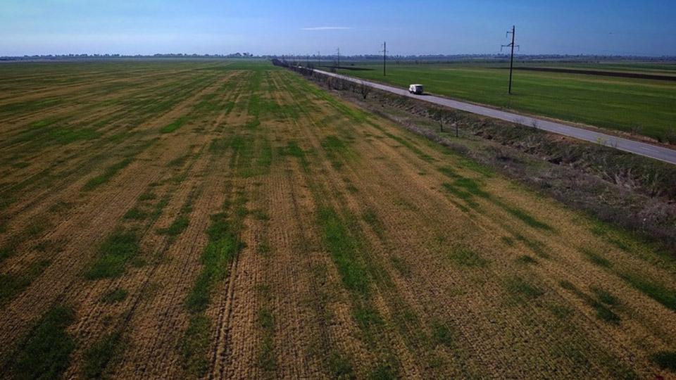 Засуха уничтожила урожай зерновых на юге Молдовы