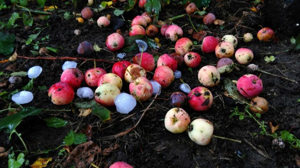 Каким будет новый страховой полис для молдавских садоводов?
