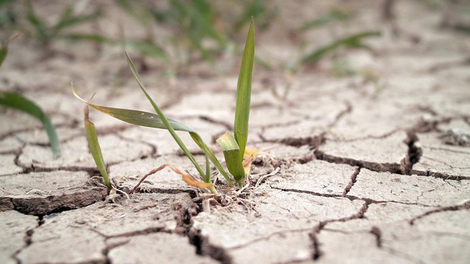 Молдавским фермерам частично возместят ущерб от засухи