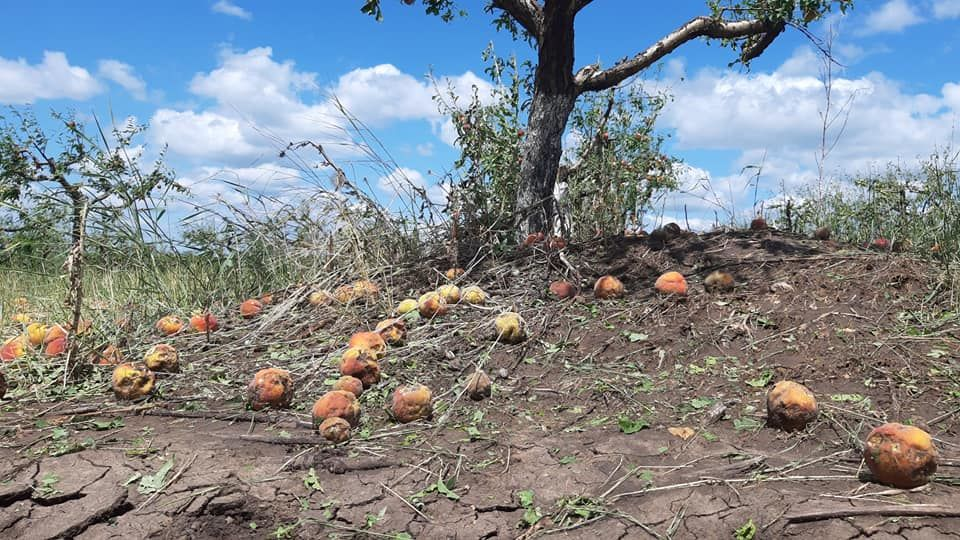 Град уничтожил персиковые сады