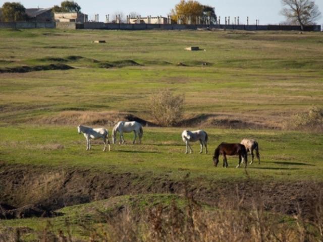 выгул лошадей на пастбище