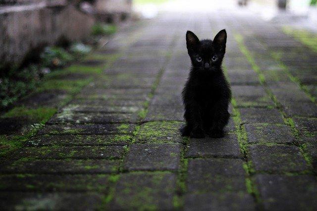 организуют бесплатную стерилизацию 80 бездомных кошек