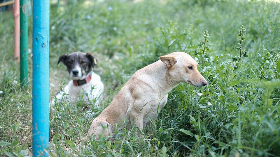 Сколько бездомных собак насчитали в Кишиневе?