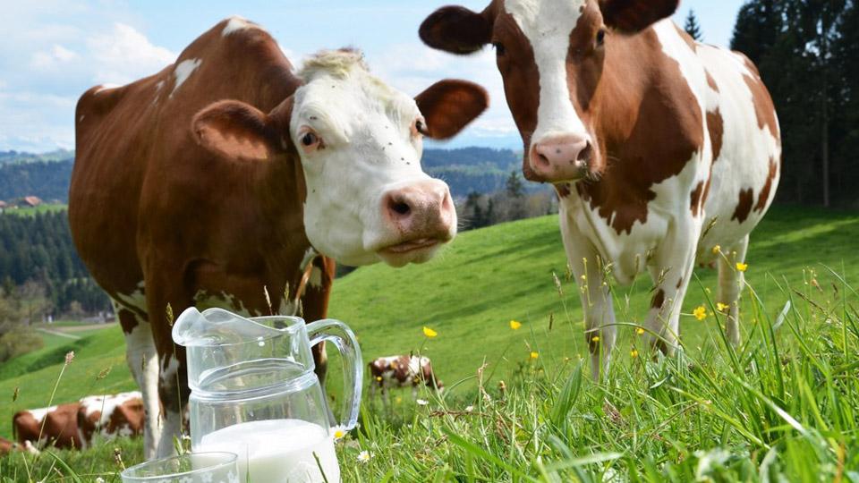 Молока в Молдове производится так мало, что почти половину приходится импортировать из других стран.
