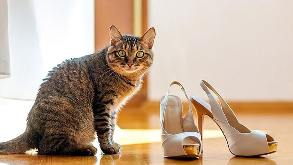 кошка метит обувь