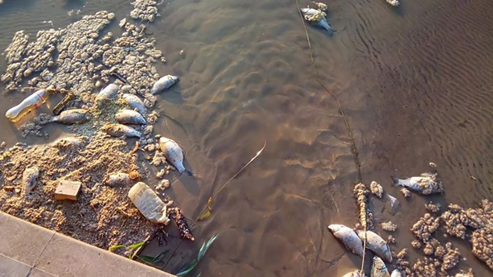 Не так давно в столичном озере в парке «Валя Морилор» всплыли десятки мертвых рыб.