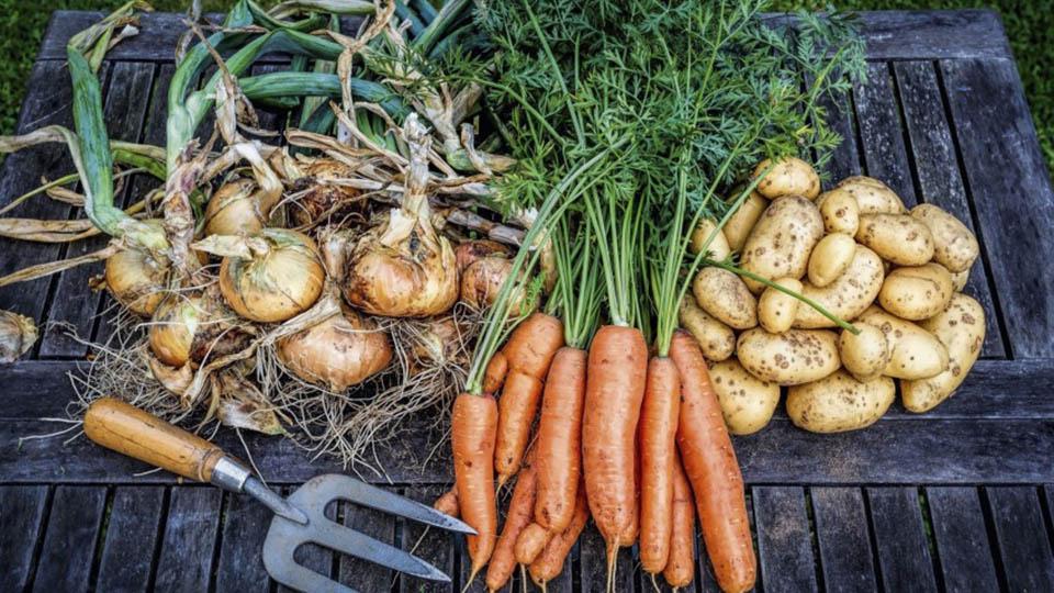 Этим летом цены на молдавские овощи «борщевого набора» очень низкие, а спрос слабый.