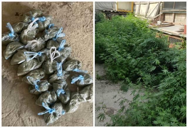 В Молдове выявлена преступная группировка по продаже марихуаны
