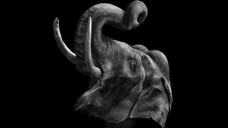фотопортреты животных Московского зоопарка, слон