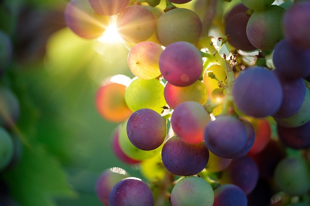 Как  вино влияет на здоровье