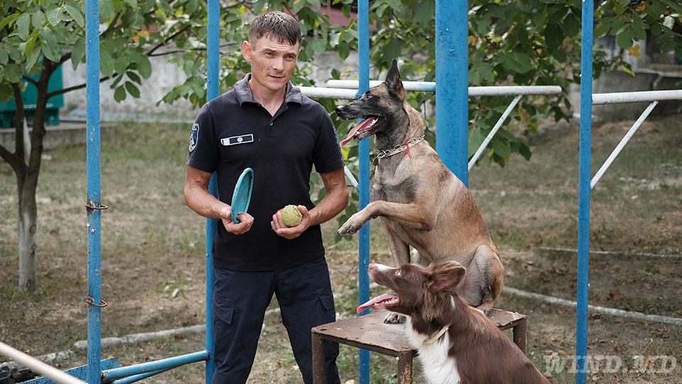 как готовят служебных собак в Молдове