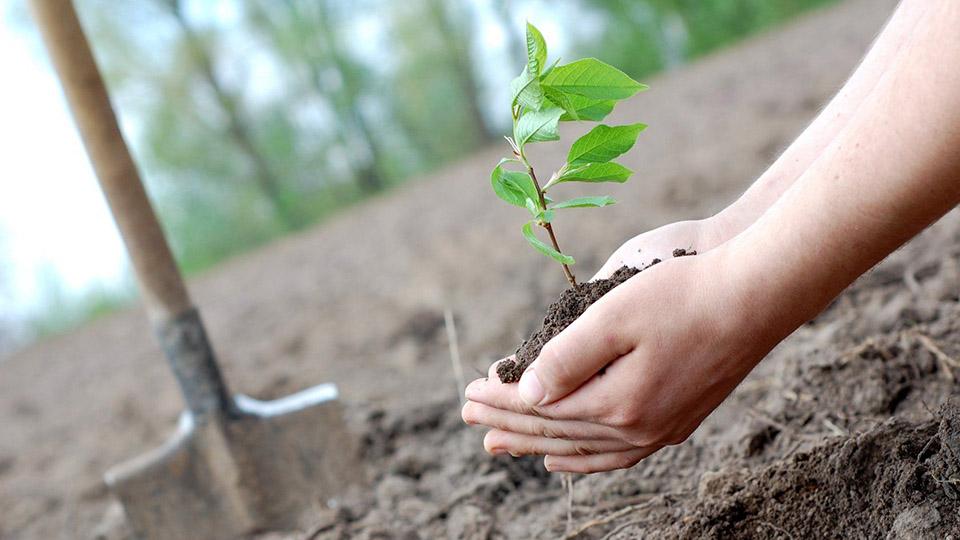 В Гагаузии высадят 120 га засухоустойчивых деревьев