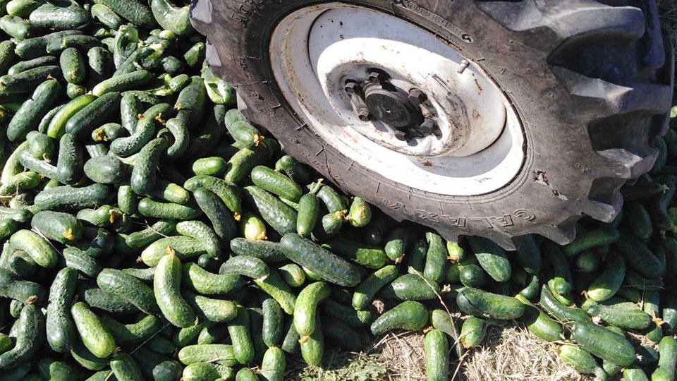 В Молдове уничтожили почти тонну овощей.
