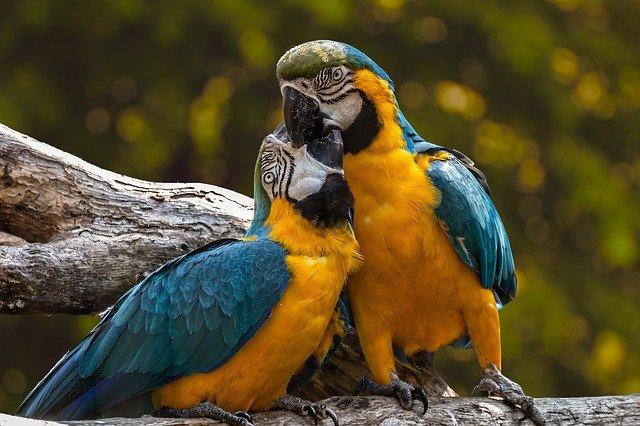 В Нидерландах выплатят компенсацию €68 тыс. за напуганных до смерти попугаев