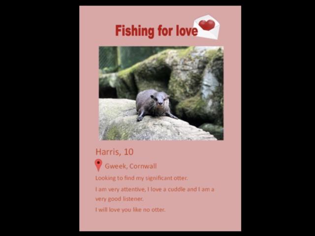 Выдра нашла свою любовь через сайт знакомств