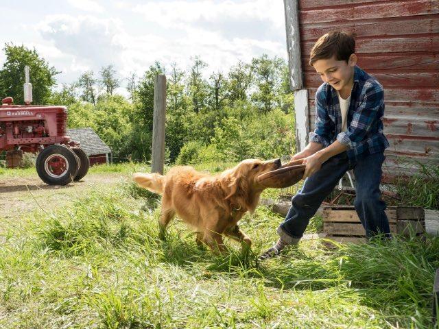 Собачья жизнь, семейный фильм про животных