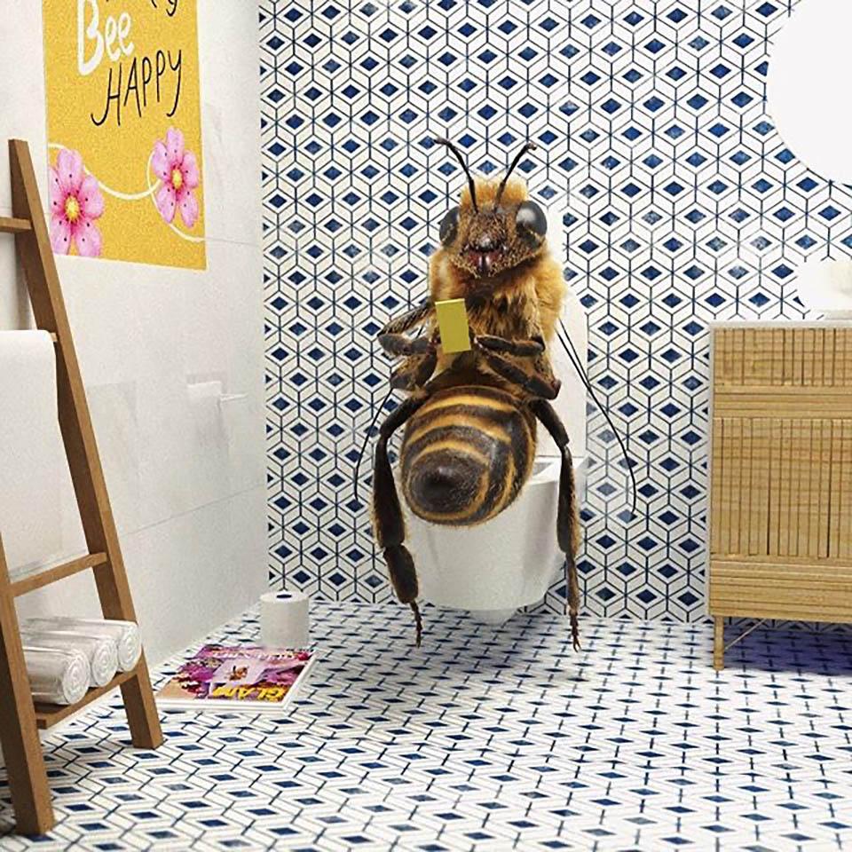 пчела дома