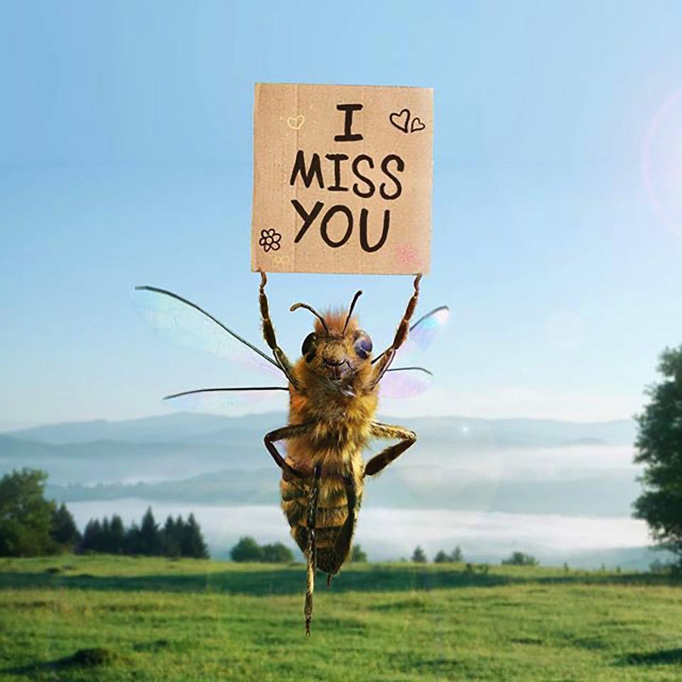 пчела с вывеской