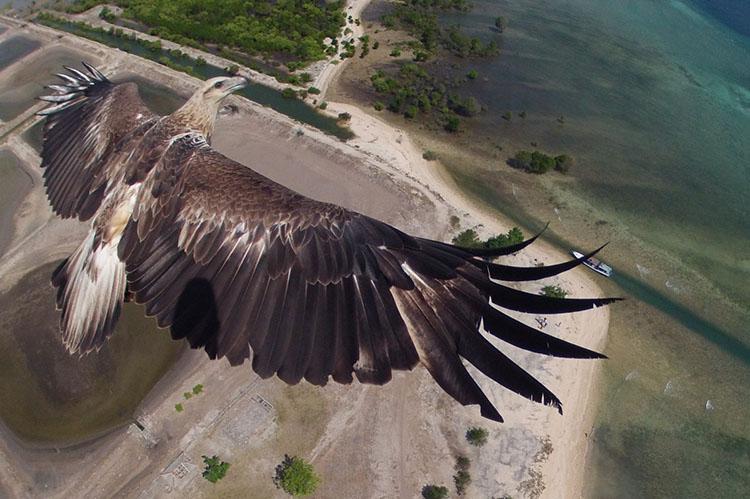 Индонезия, парящий орел, дрон
