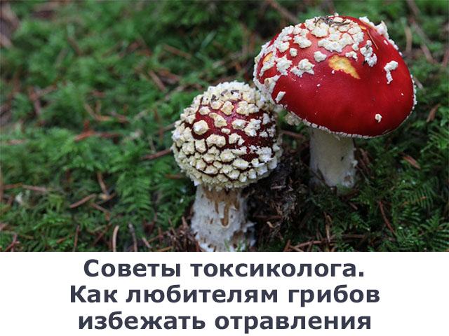 грибы, отравление, советы токсиколога