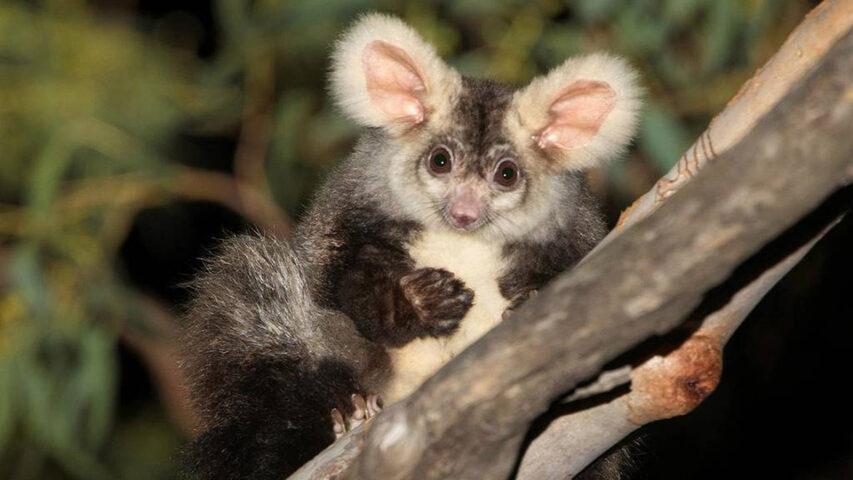 В Австралии обнаружили два новых вида животных