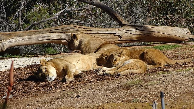 В Кишиневском зоопарке появятся новые обитатели
