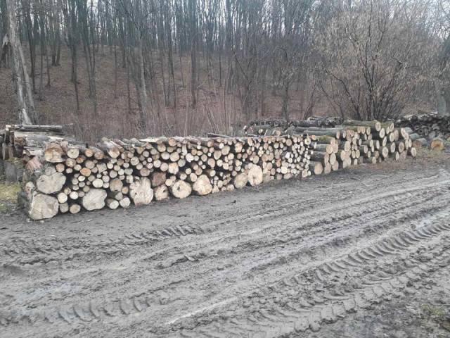 Что известно о вырубке деревьев в заповеднике Плаюл Фагулуй