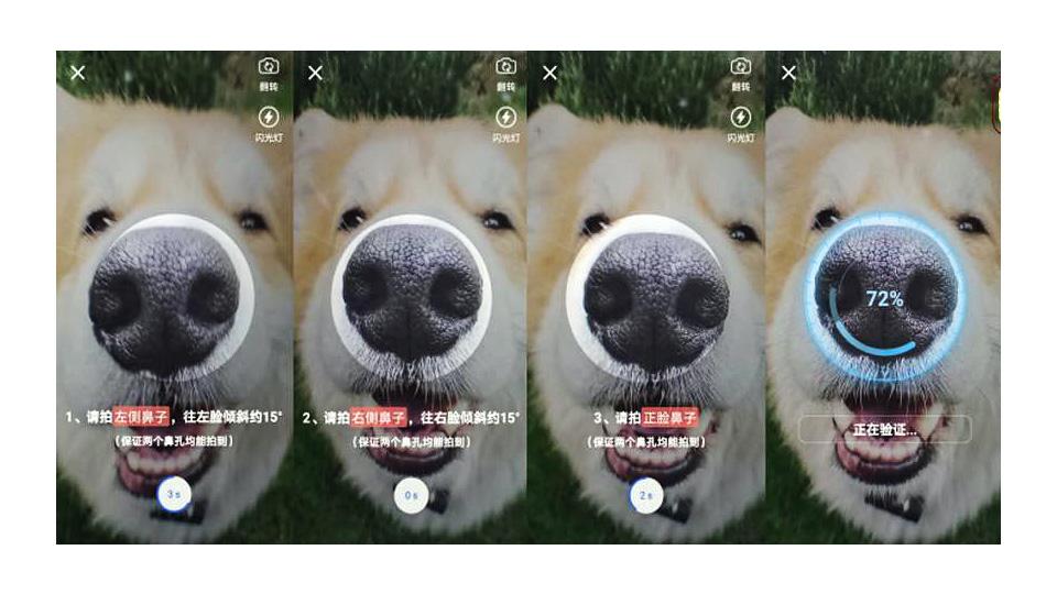 Cобакам в Китае выдают цифровые паспорта с отпечатком носа