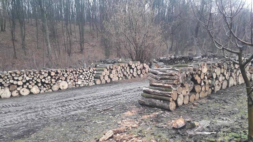 Руководство заповедника Плаюл Фагулуй: вырубка деревьев законна и не превышает нормы