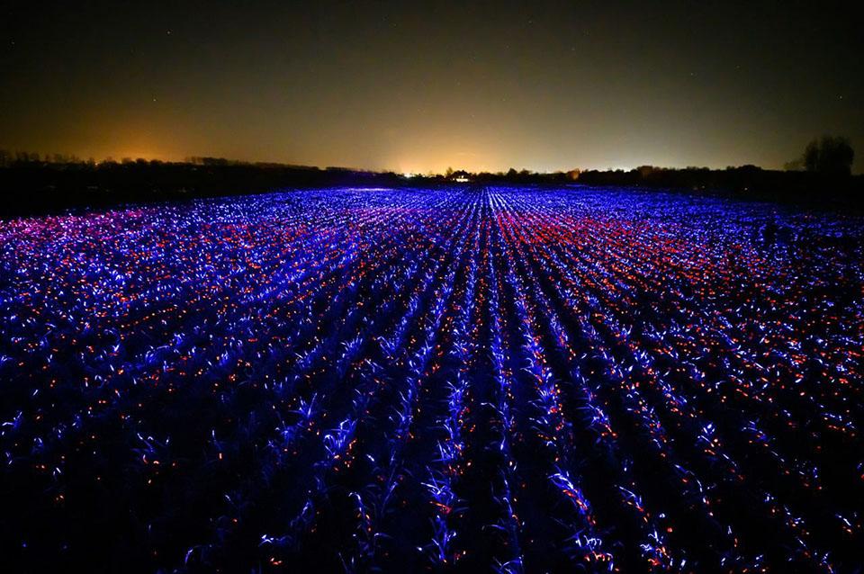 Художник из Нидерландов Даан Рузегаард превратил поле лука-порея площадью два гектара в световую инсталляцию.