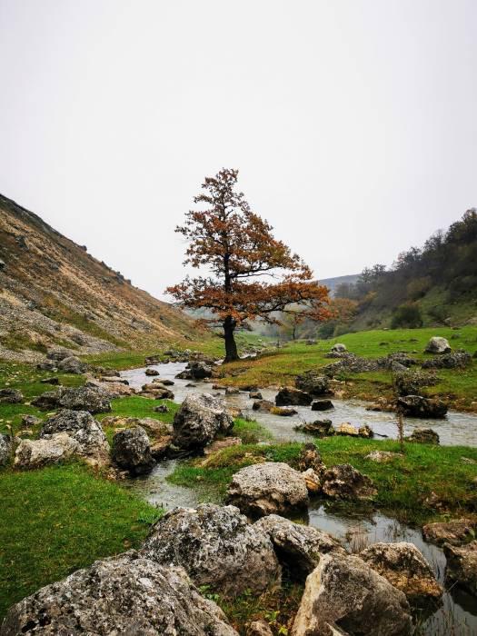 Одно дерево - четыре времени года. Осень