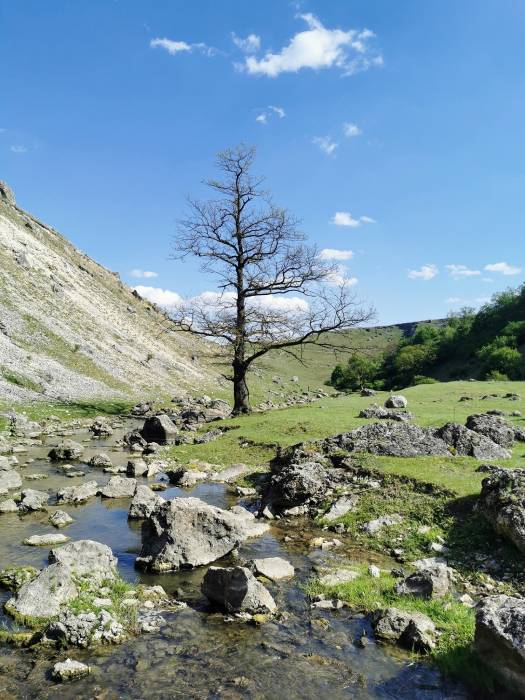 Одно дерево - четыре времени года. Весна