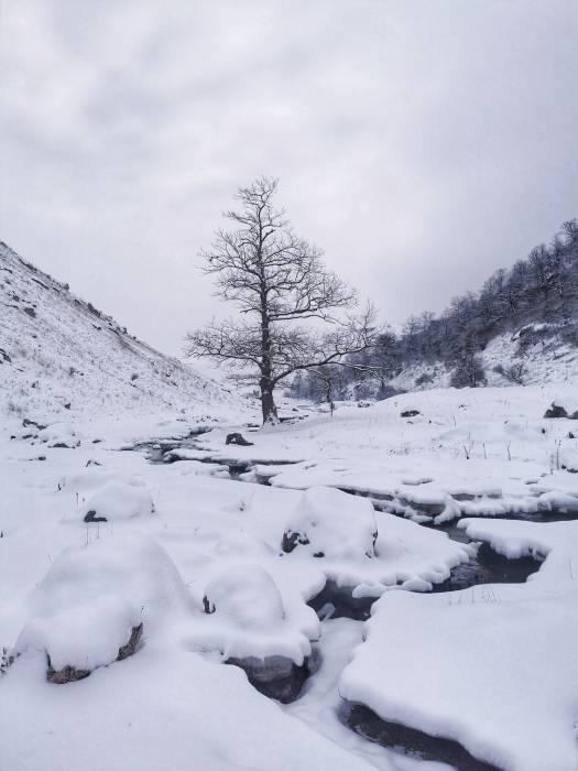 Одно дерево - четыре времени года. Зима